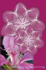 Blütensterne - Sternenblüten