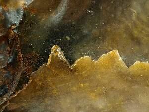 Feuerstein, Makrofotographie von Hartmut Warm, Bild 1