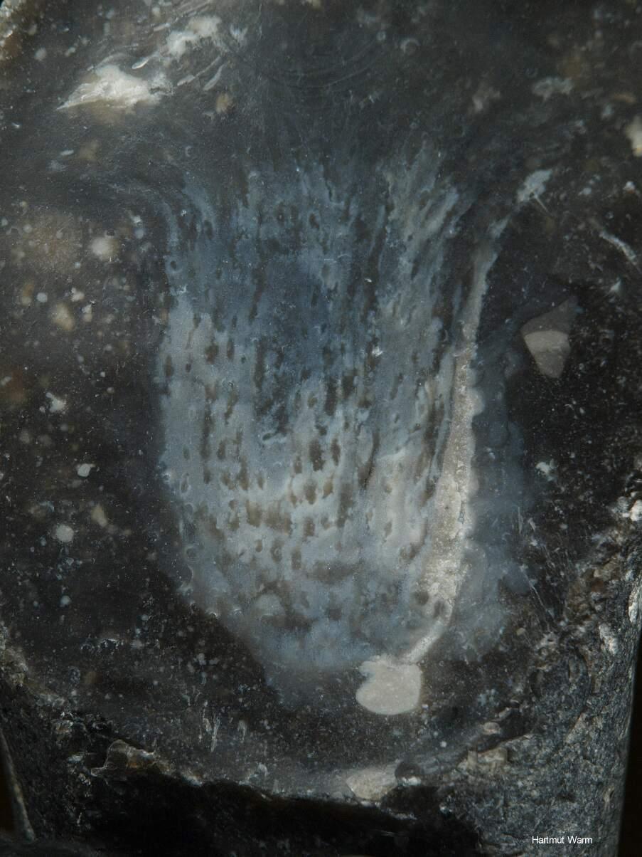 Feuerstein, Makrofotographie von Hartmut Warm
